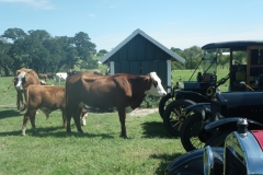 pasture parking